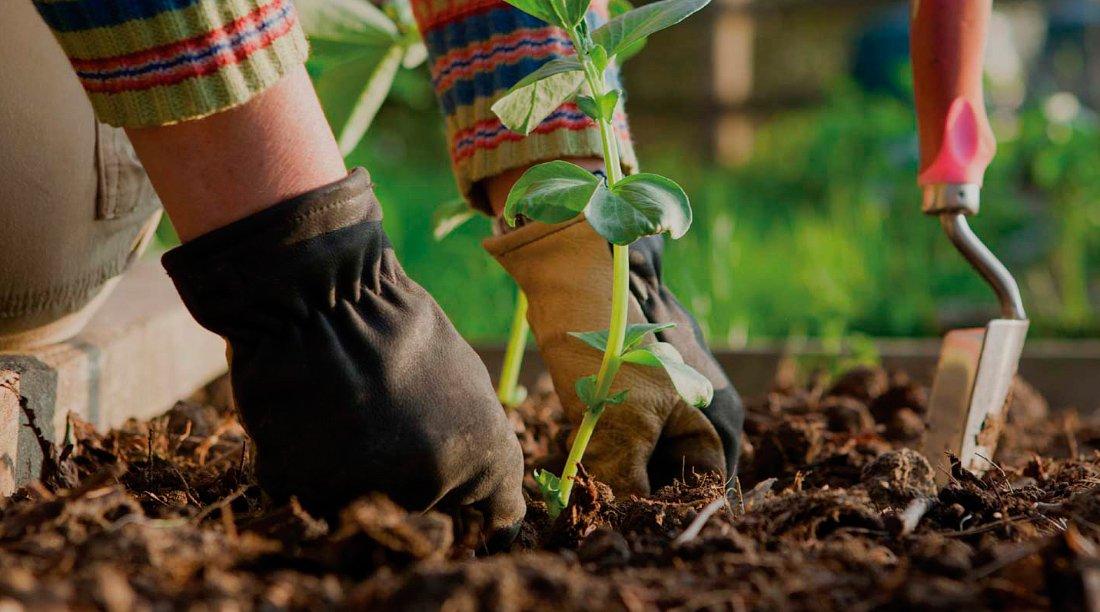 Mejores herramientas para el jard n for Herramientas para el jardin